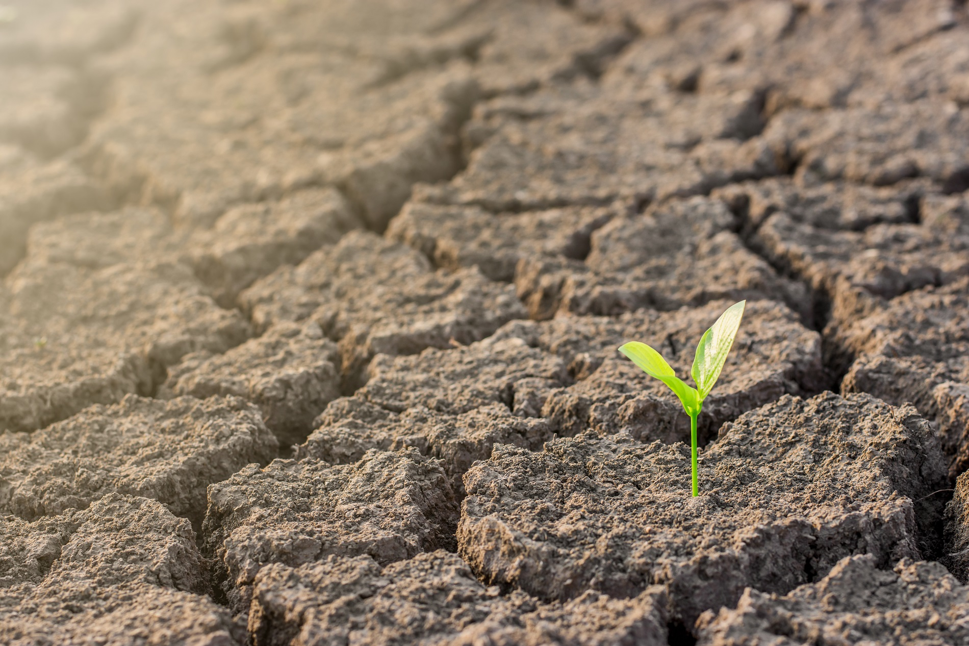 La agricultura frente al reto del cambio climático