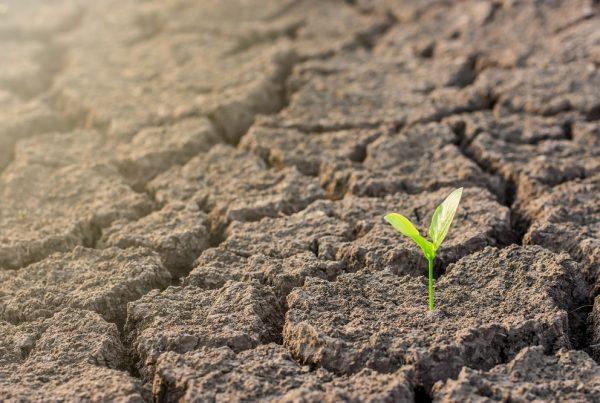 agricultura cambio climático sostenibilidad buenas prácticas agrícolas sanidad vegetal aepla