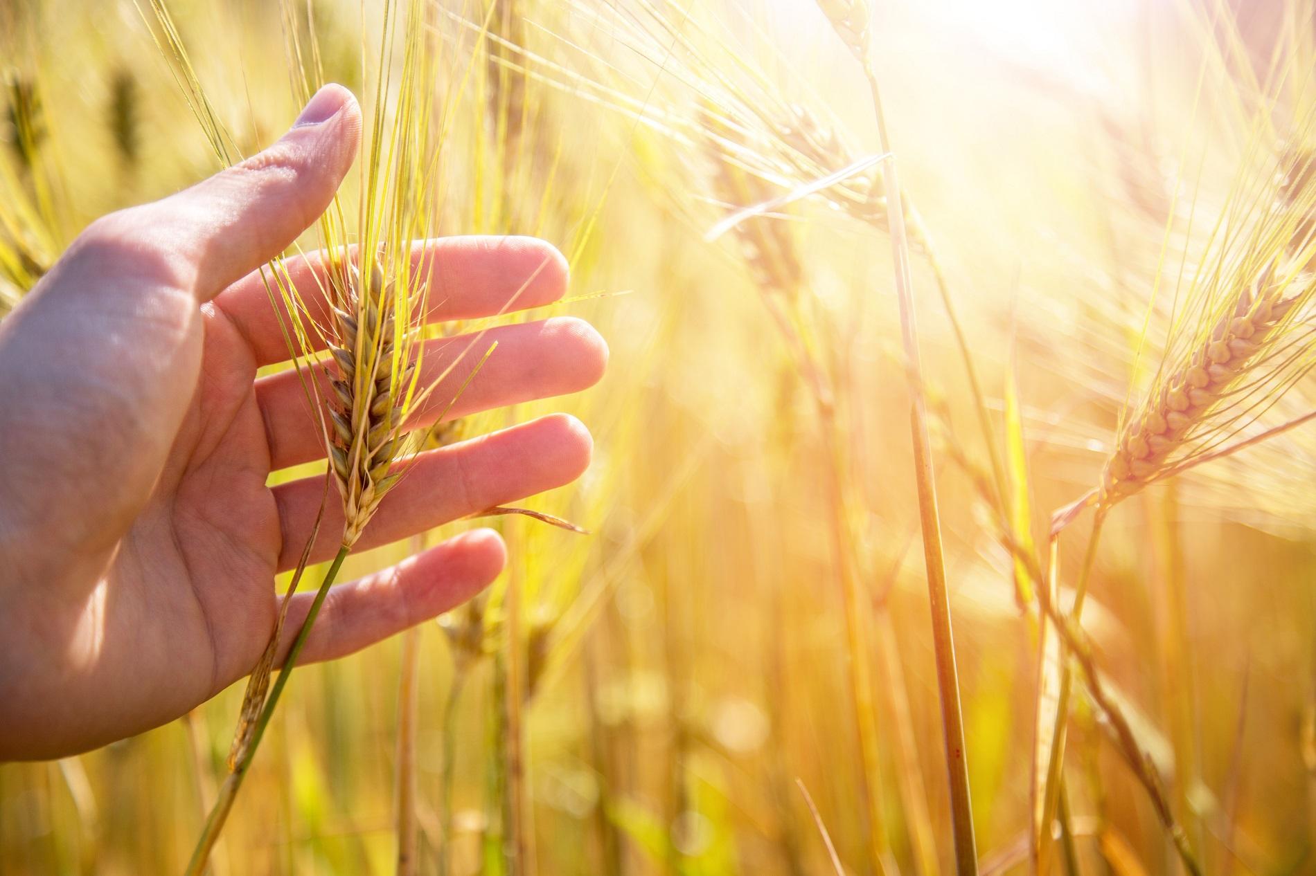 Tratamientos fitosanitarios: ¿Qué medidas son básicas para proteger tus cultivos?