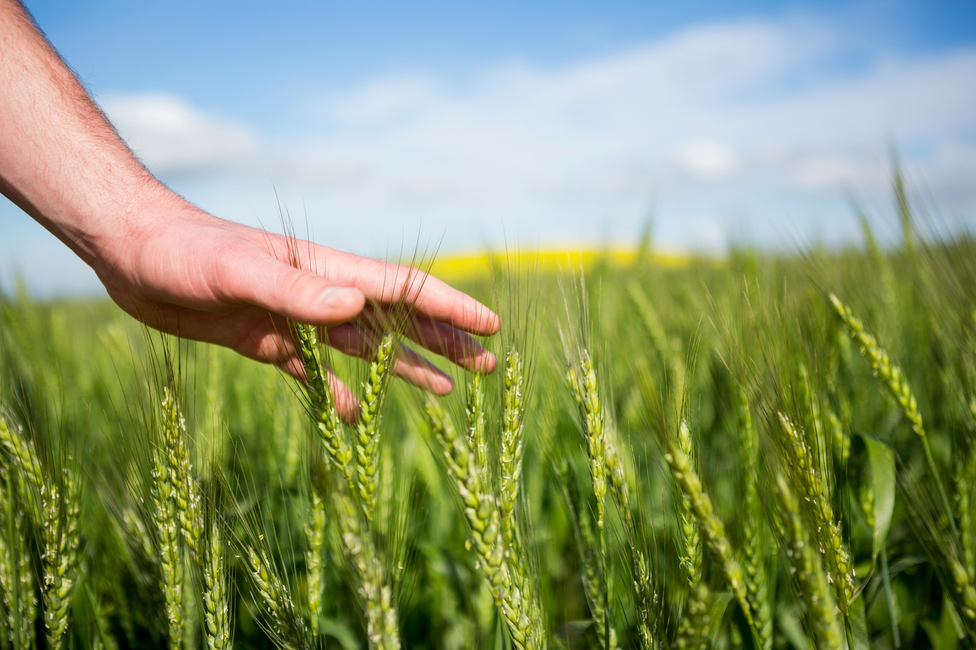 Sanidad vegetal, productividad agrícola y reducción del desperdicio alimentario