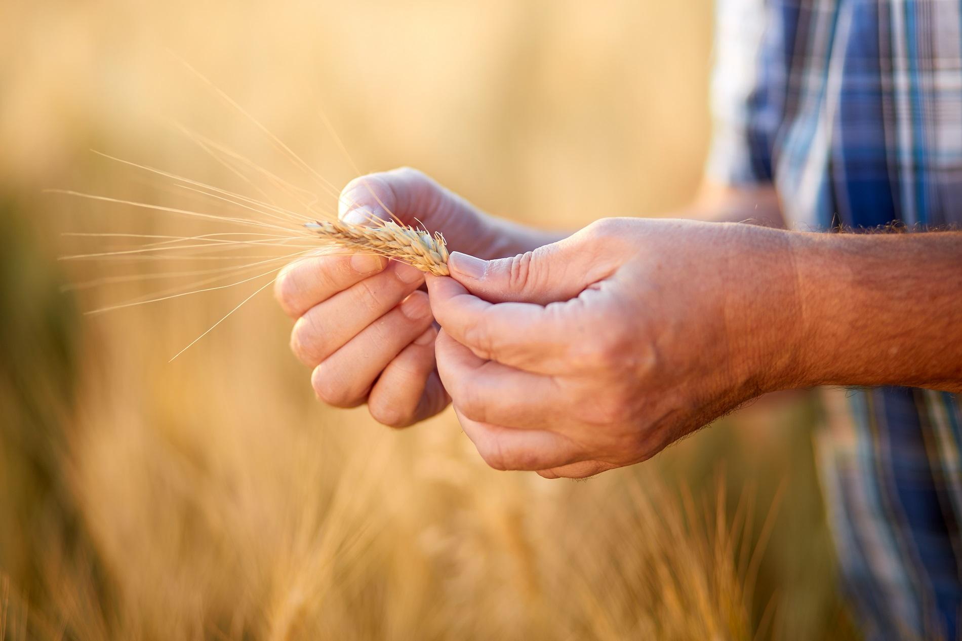 ¿Por qué se considera esencial la sanidad vegetal para la erradicación de la pobreza?