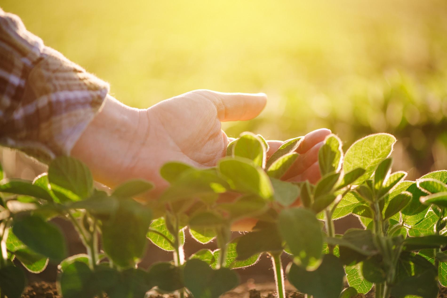 Buenas prácticas agrícolas: Cultivos cubierta