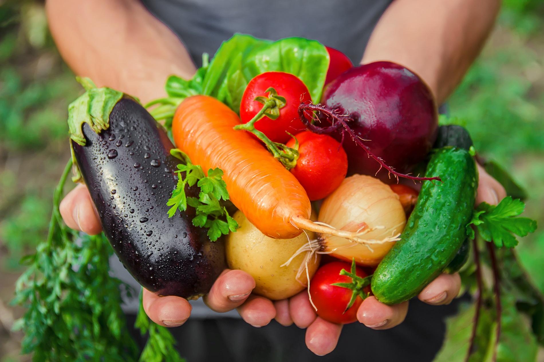 La sanidad vegetal como garantía para disfrutar de una alimentación segura