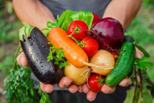 sanidad vegetal alimentación segura alimentos saludables agricultura protección de cultivos aepla