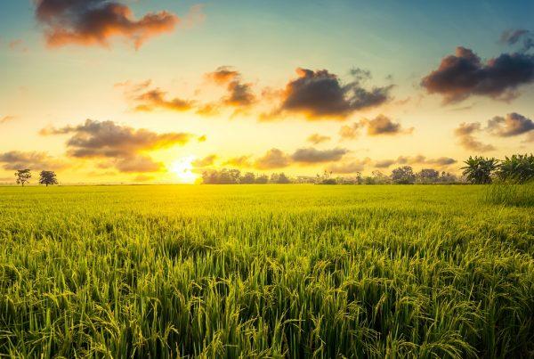año 2020 sanidad vegetal agricultura covid-19 aepla