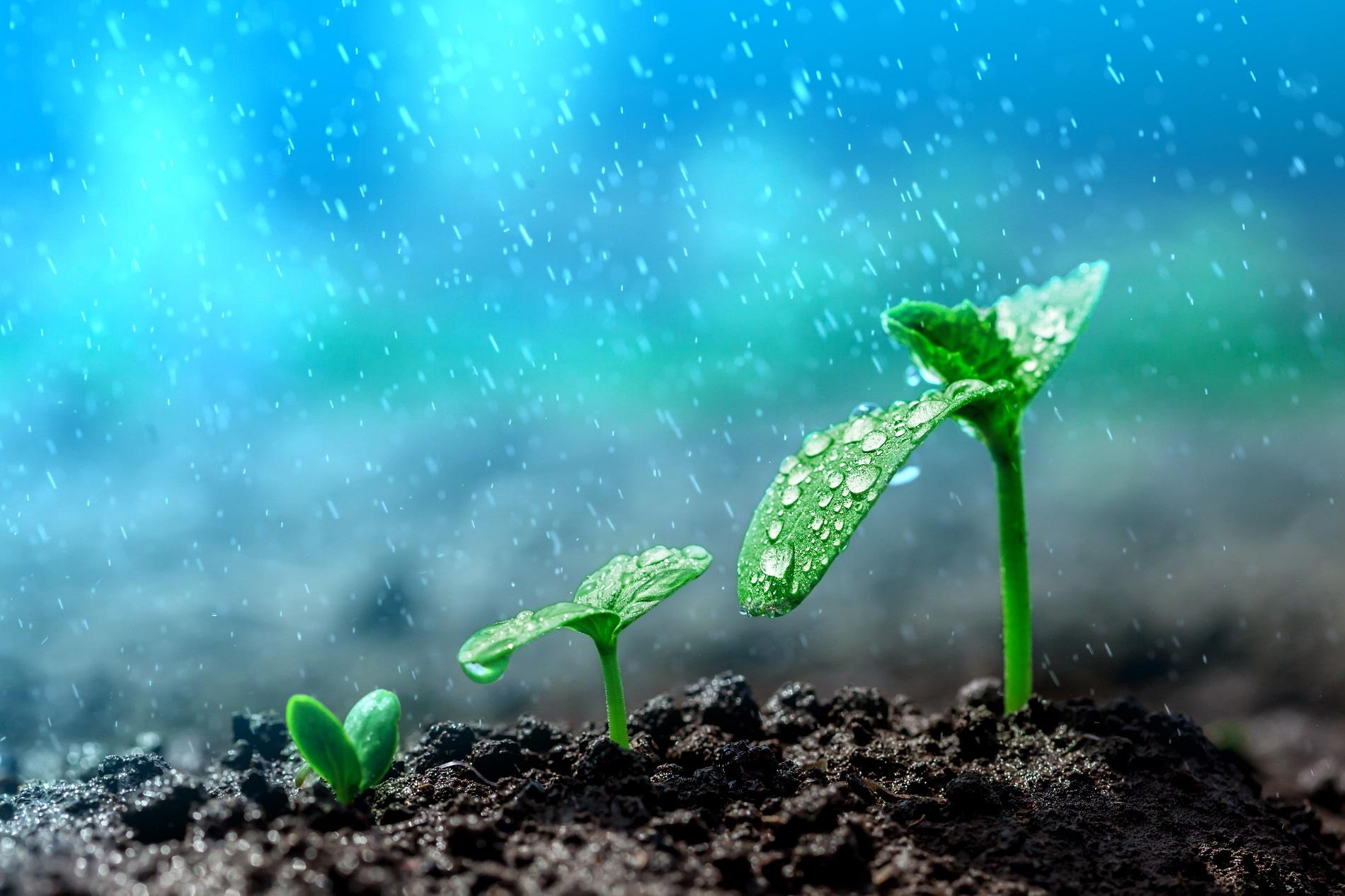 Buenas prácticas agrícolas: Condiciones ambientales en la aplicación de fitosanitarios