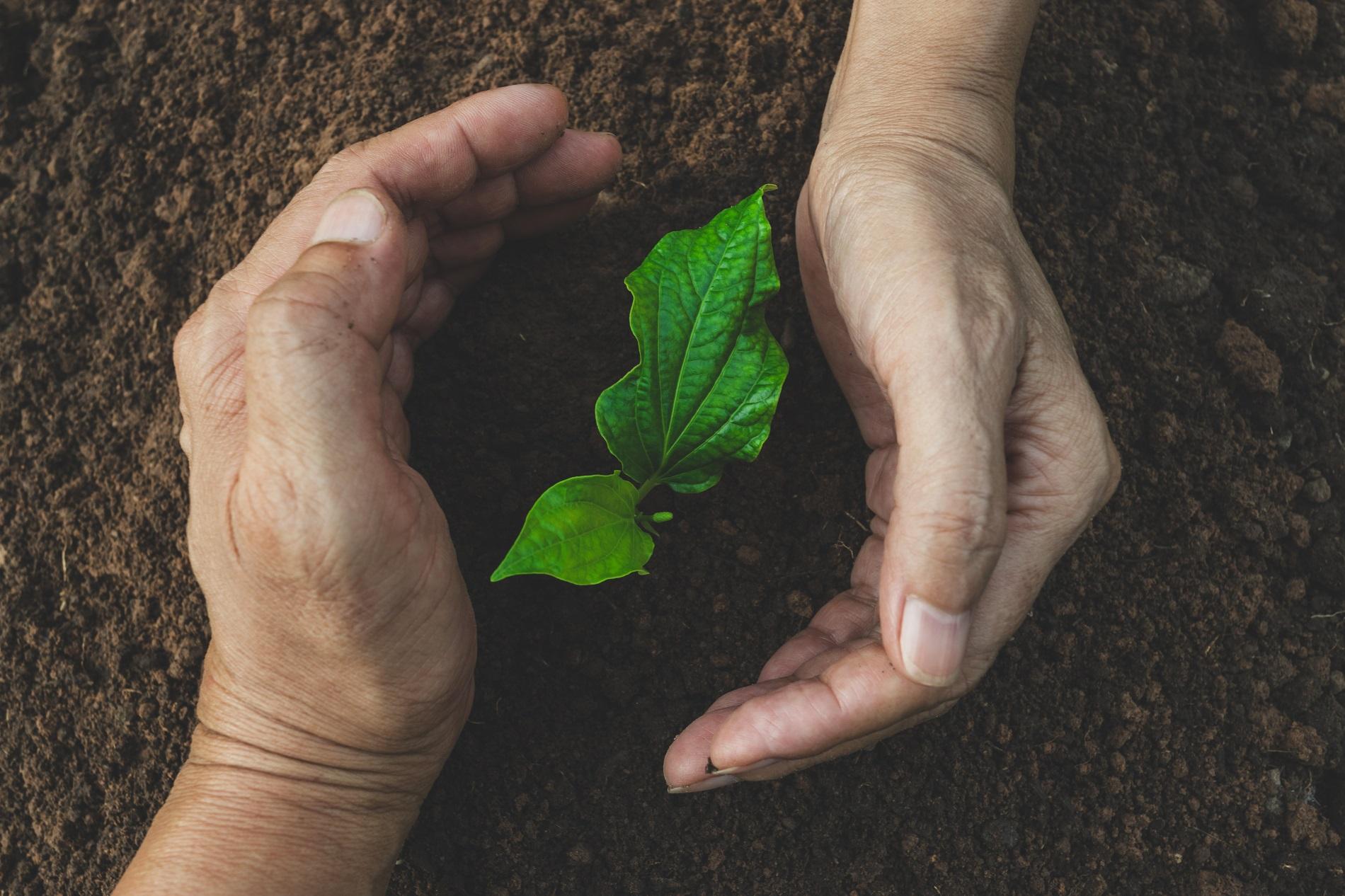 Proteger tus cultivos es nuestra forma de proteger nuestra agricultura