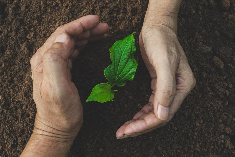 protección de cultivos proteger agricultura sanidad vegetal tratamientos fitosanitarios agricultura aepla