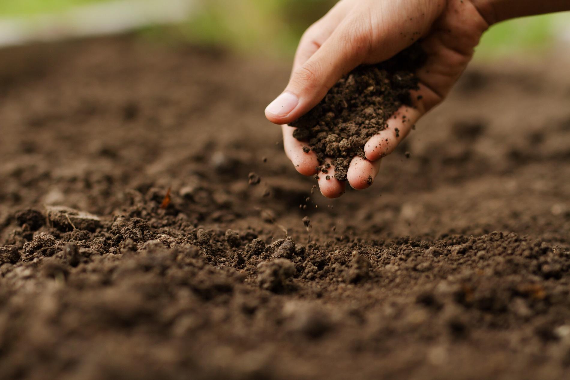 ¿Qué beneficios puede aportar la siembra directa de tus cultivos?