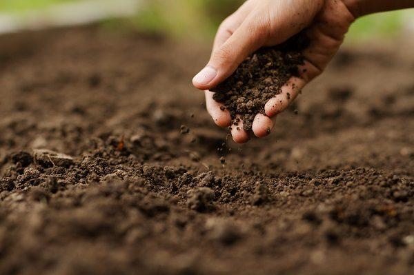 siembra directa agricultura sostenible buenas prácticas agrícolas sanidad vegetal aepla