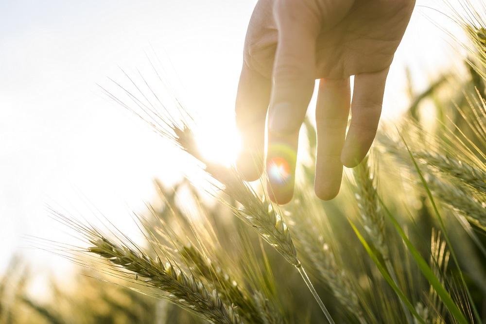 Gestión Integrada de Plagas guías informativas Ministerio de Agricultura sanidad vegetal protección de cultivos agricultura tratamientos fitosanitarios aepla