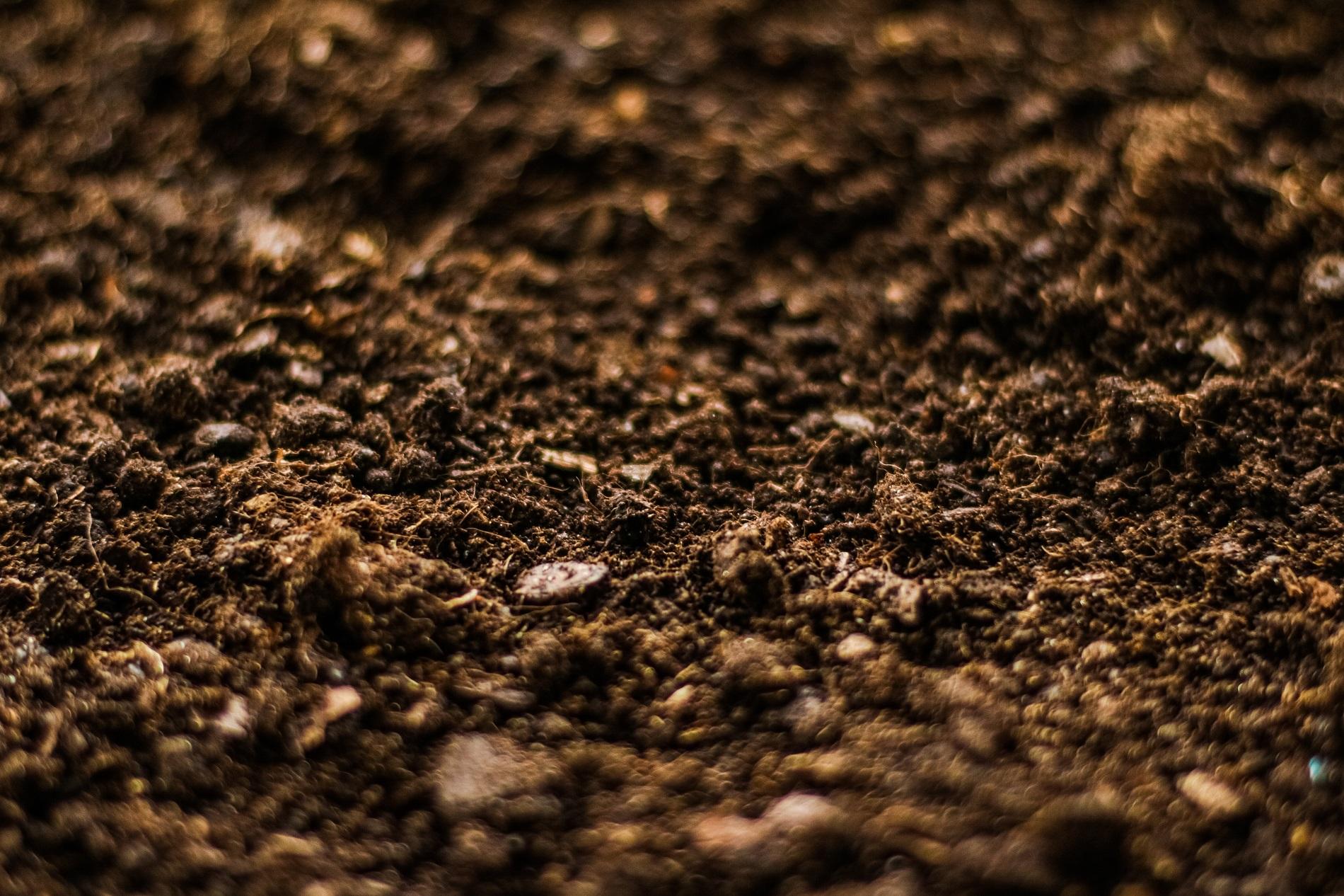 Buenas prácticas agrícolas: Preparación del lecho de siembra