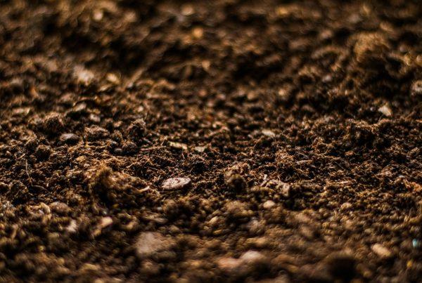 lecho de siembra materia orgánica buenas prácticas agrícolas sanidad vegetal agricultura sostenibilidad aepla