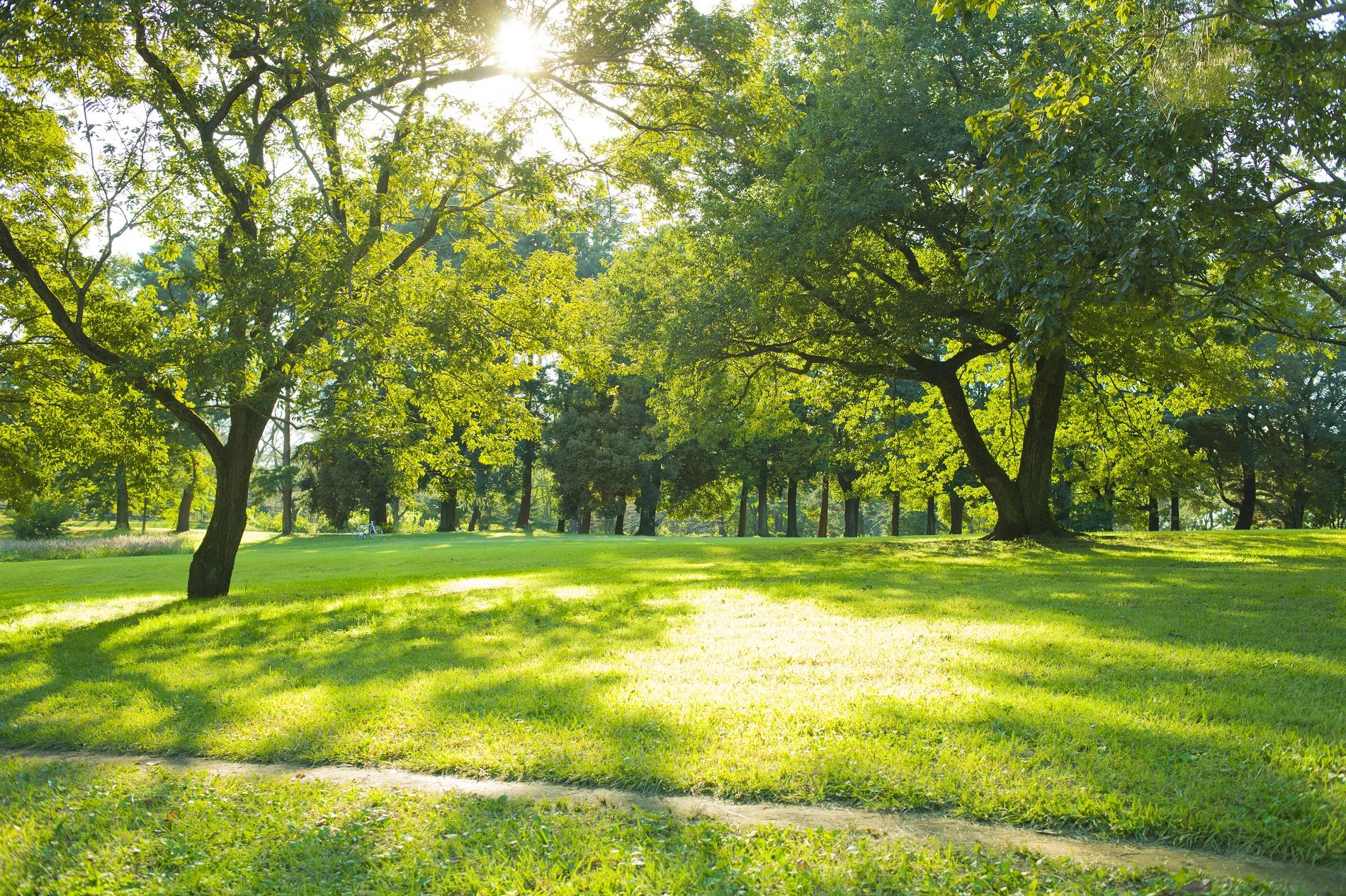 La Sanidad Vegetal y su papel esencial para la protección y mantenimiento óptimo de áreas verdes