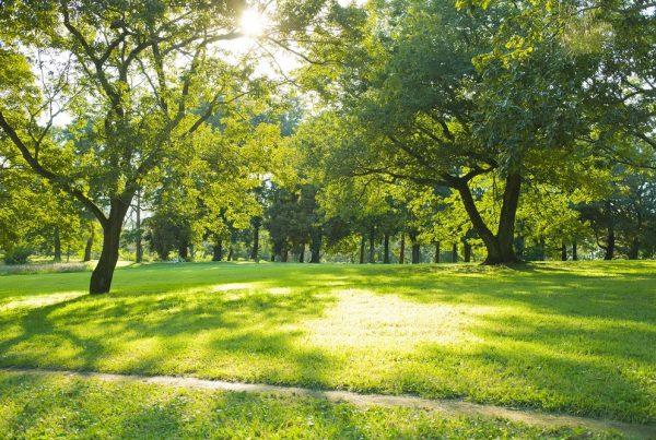 áreas verdes sanidad vegetal protección vegetal ciudades verdes entornos saludables aepla