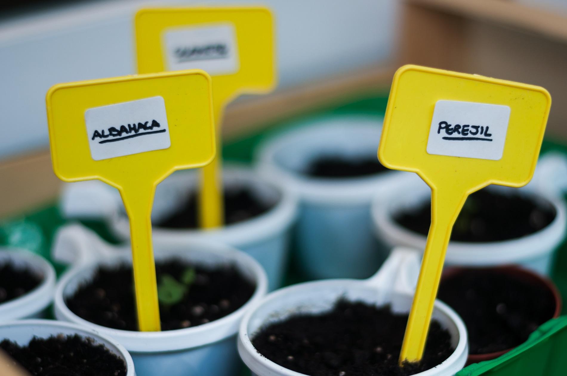 ¿Cómo utilizar semilleros para la plantación de cultivos en tu huerto doméstico?