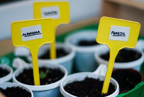 semilleros huerto doméstico siembra de cultivos siembra protegida agricultura doméstica huertos urbanos sanidad vegetal aepla