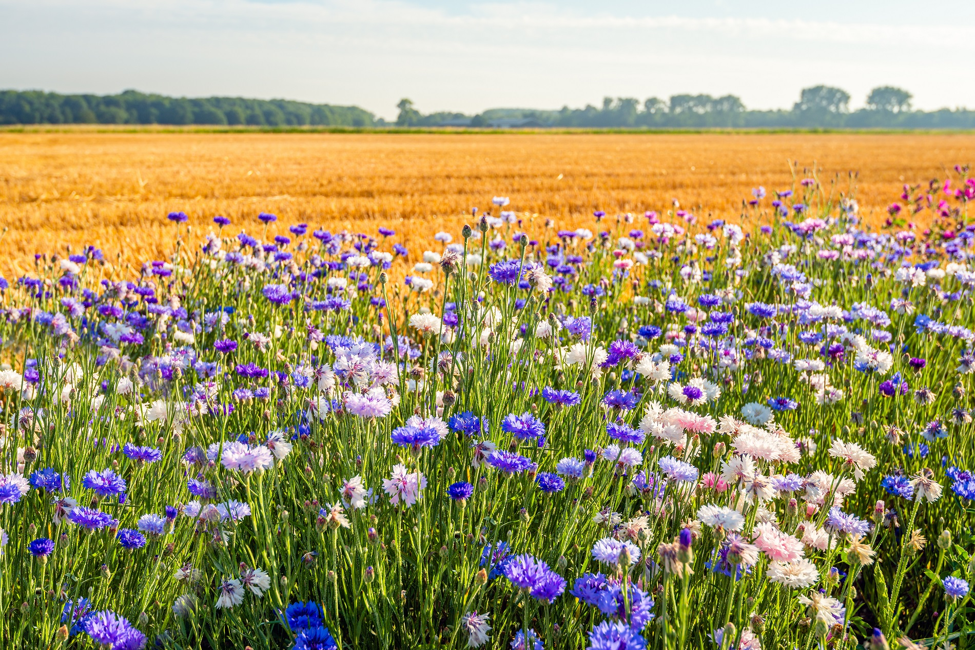 Agricultura y biodiversidad: dos caras de una misma moneda