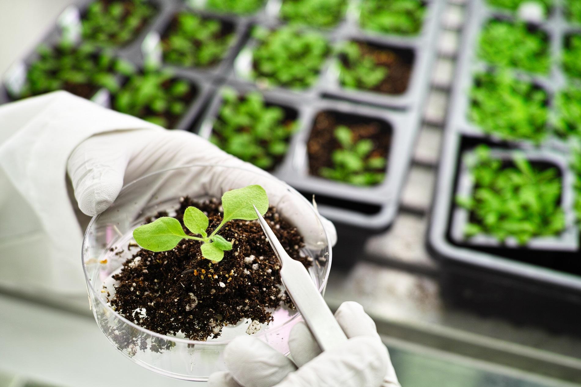 La biotecnología vegetal como prioridad para un futuro sostenible de la agricultura