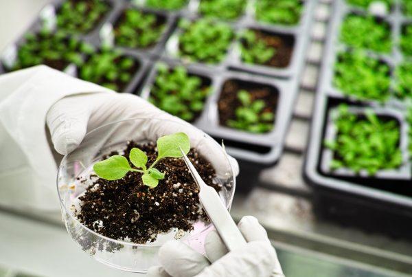 biotecnología vegetal agricultura sostenible sanidad vegetal seguridad alimentaria aepla