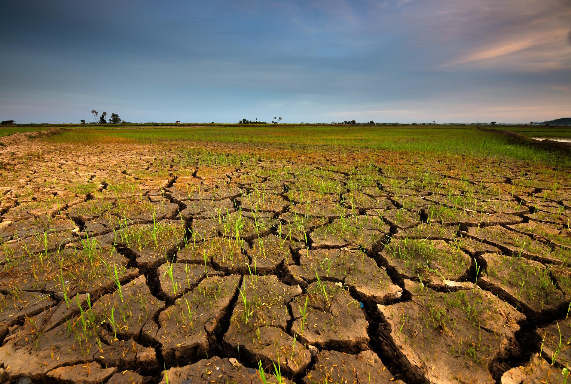 Buenas prácticas agrícolas: Prácticas de cultivo para reducir la erosión
