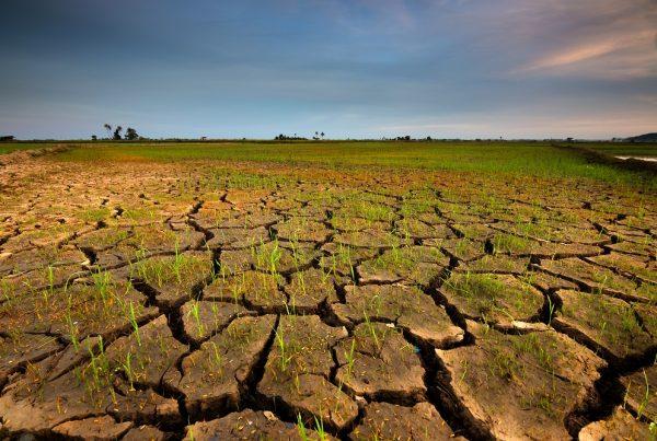 buenas prácticas agrícolas técnicas de cultivo erosión sostenibilidad agricultura sanidad vegetal aepla