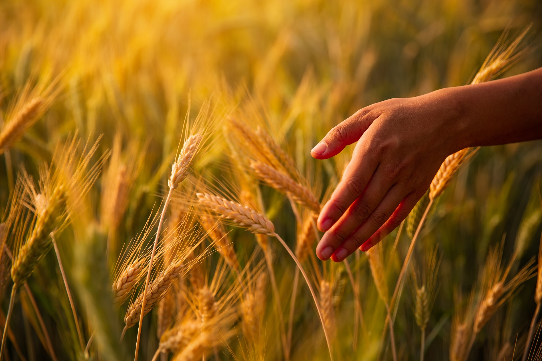 Buenas prácticas agrícolas: Uso responsable de productos fitosanitarios