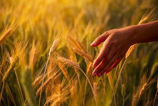 fitosanitarios uso responsable buenas prácticas agrícolas sanidad vegetal agricultura sostenibilidad aepla