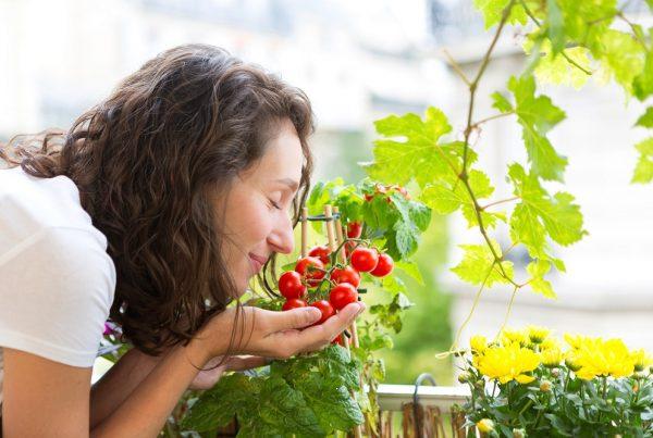 cuidado huerto doméstico agricultura urbana huerto urbano ciudades sostenibles áreas verdes aepla