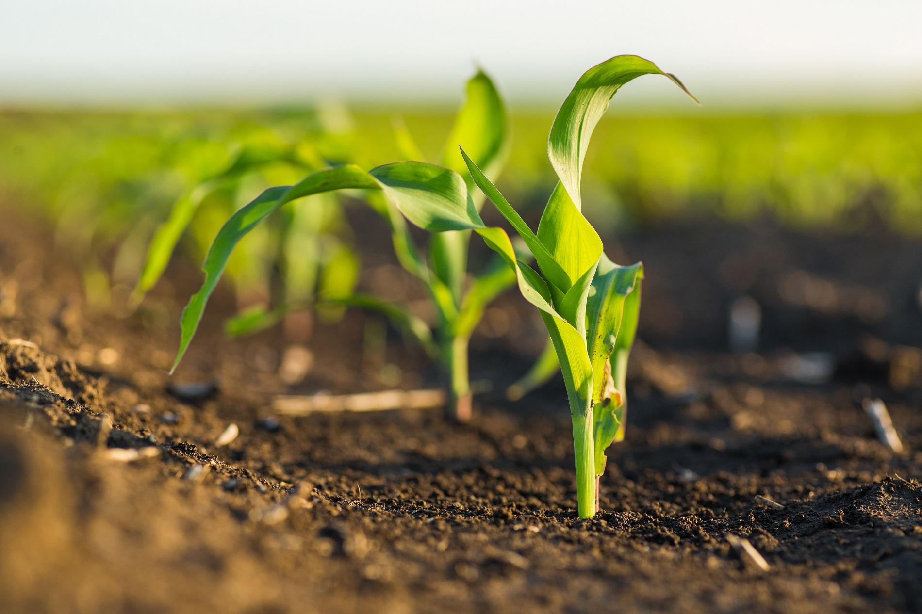¿A qué amenazas agrícolas debes prestar una especial atención durante la primavera?