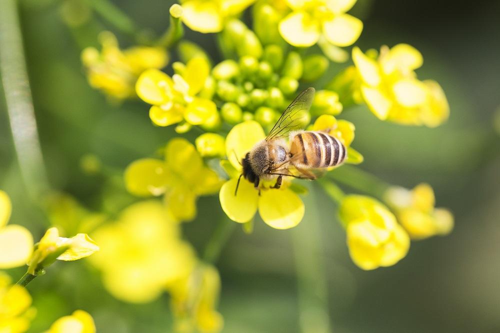 biodiversidad protección de polinizadores buenas prácticas agrícolas sanidad vegetal gestión integrada de plagas agricultura aepla