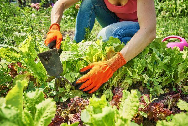 huerto urbano huerto doméstico agricultura sostenible áreas verdes sanidad vegetal aepla