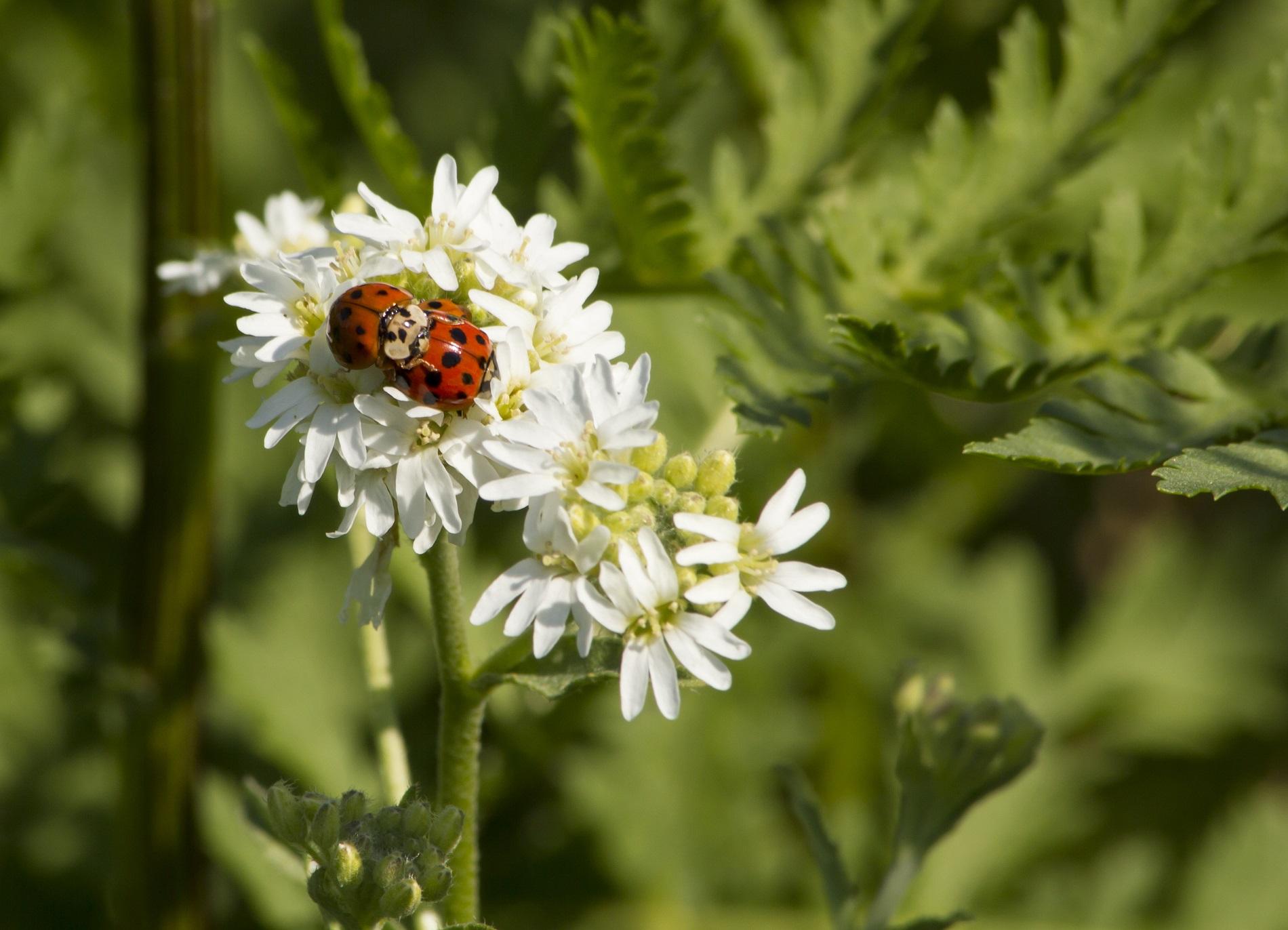 ¿Qué es la fauna auxiliar y qué aporta al desarrollo y protección de tus cultivos?