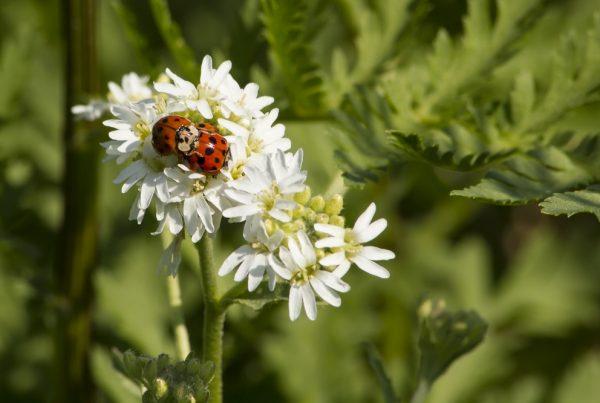 fauna auxiliar protección de cultivos sanidad vegetal agricultura sostenible sector agrícola biodiversidad sostenible plagas y enfermedades aepla
