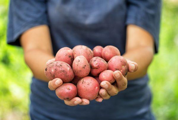 agricultura ecológica sanidad vegetal productos fitosanitarios protección de cultivos aepla
