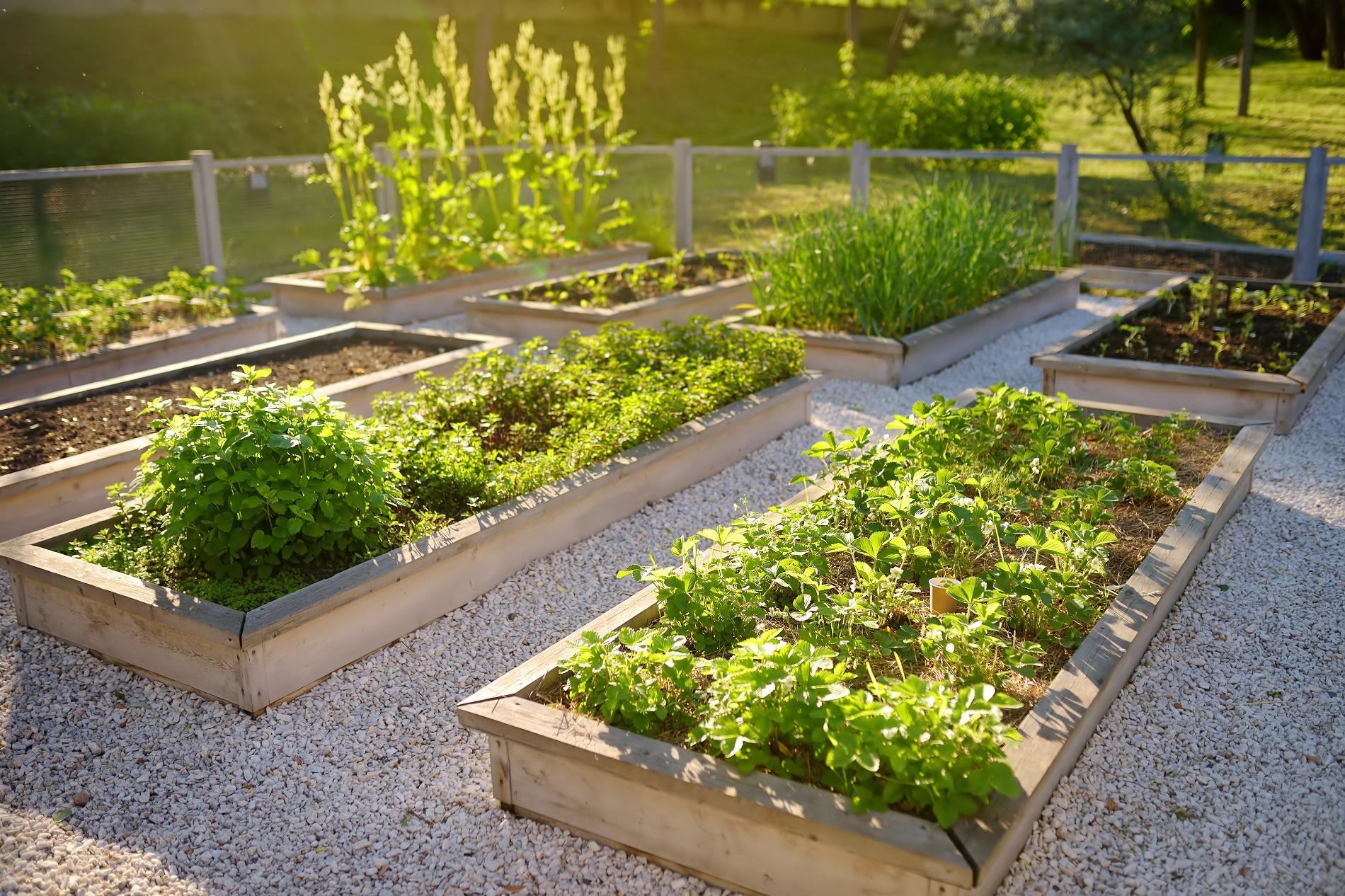 Huertos urbanos: Mil y una formas de apostar por la agricultura doméstica