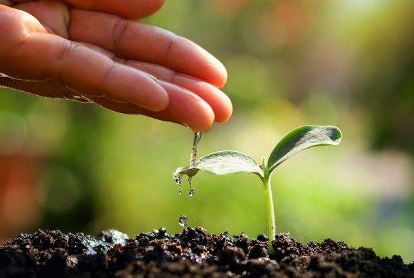 masas de agua protección del entorno buenas prácticas agrícolas sanidad vegetal prevención tratamientos fitosanitarios agricultura aepla