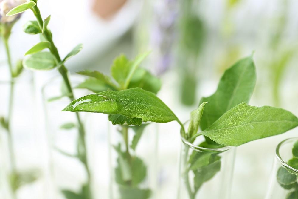 manifiesto por la agrociencia agricultura sostenible pacto verde europeo Farm2Fork sostenibilidad sanidad vegetal protección de cultivos aepla