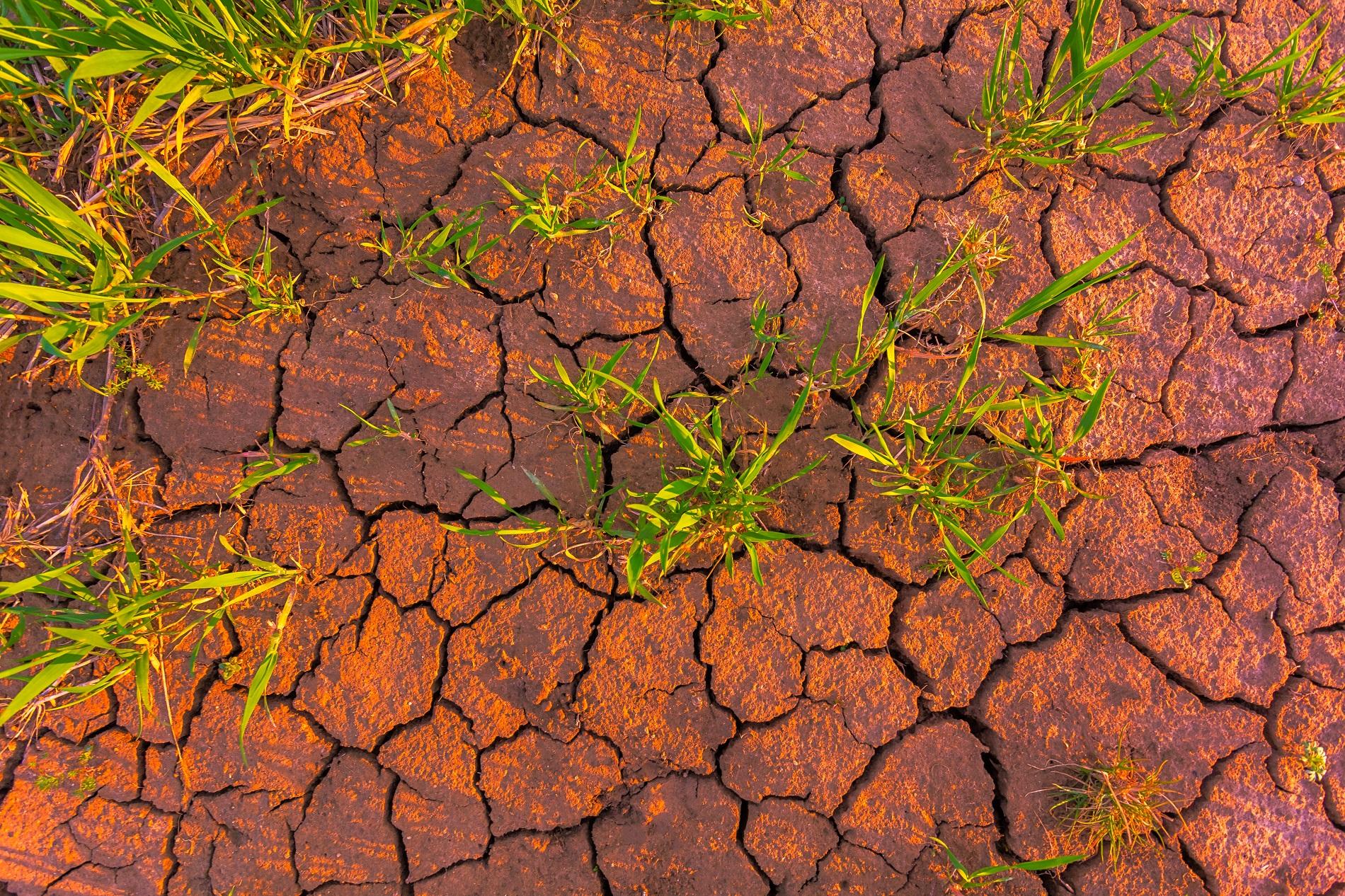 ¿Qué puedes hacer para reducir la compactación superficial del suelo agrícola?