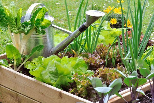 jardines comestibles agricultura urbana paisajismo áreas verdes sanidad vegetal aepla