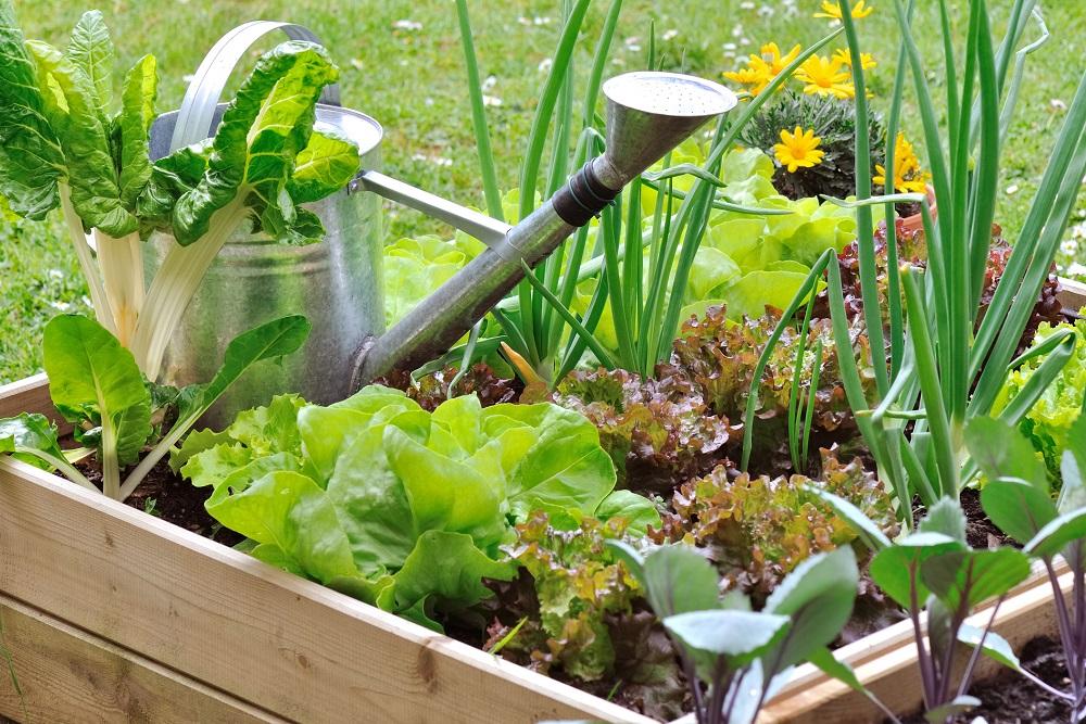 Jardines comestibles: la combinación perfecta de paisajismo y agricultura urbana