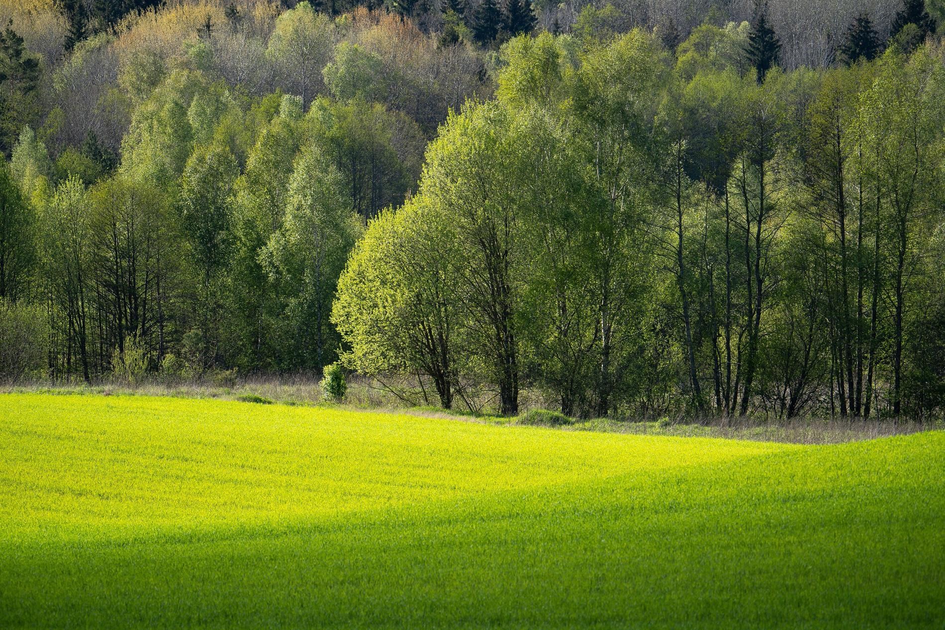 ¿Por qué es recomendable mantener arboledas próximas a tu parcela agrícola?