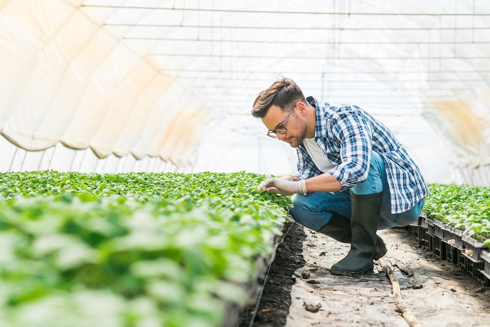 invernaderos sanidad vegetal cultivos en invernadero productividad agrícola agricultura sostenibilidad aepla