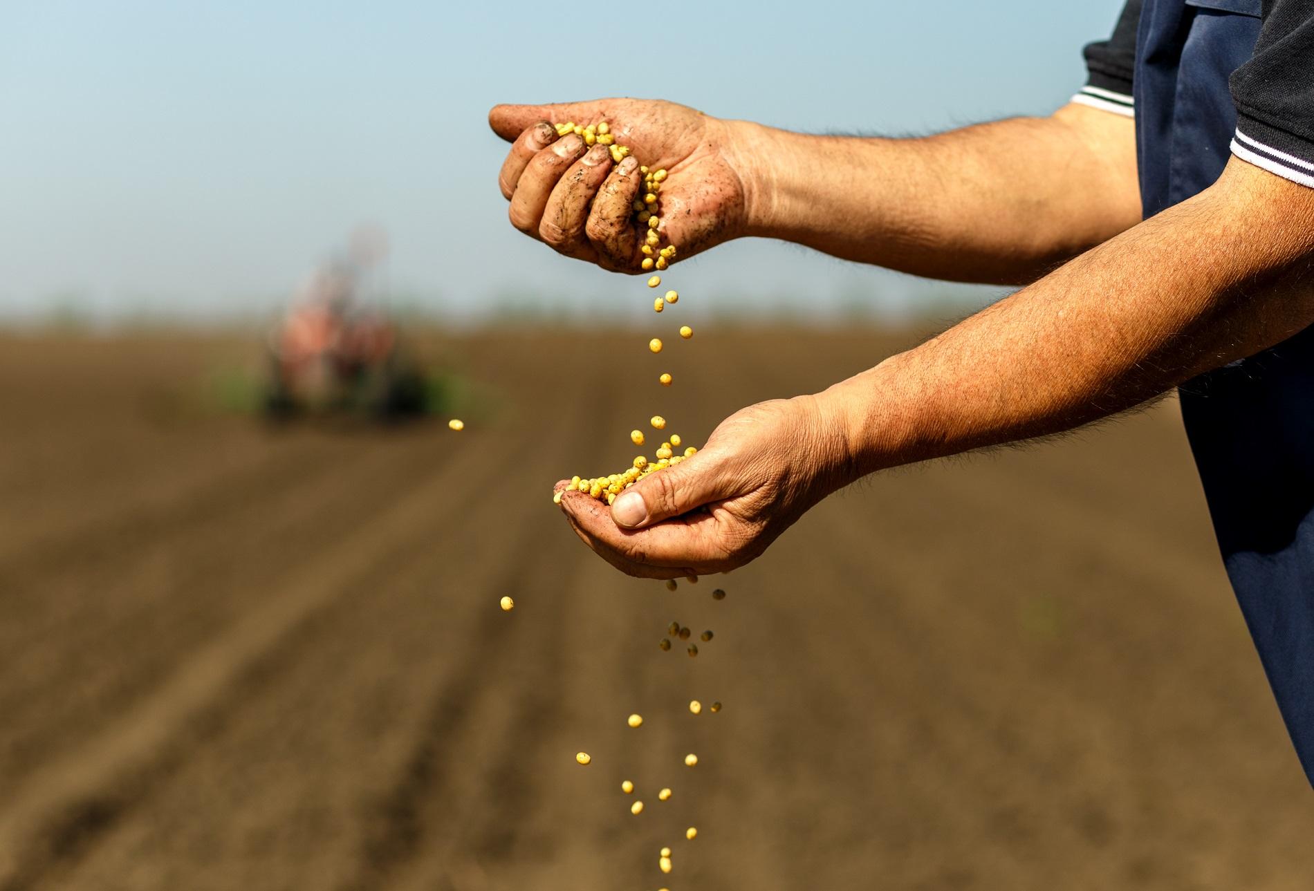 ¿Qué tipos de semillas puedes emplear en tu actividad agrícola?