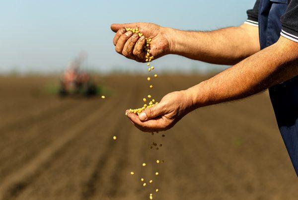 semillas uso agrícola cosecha protección de cultivos sanidad vegetal agricultura aepla