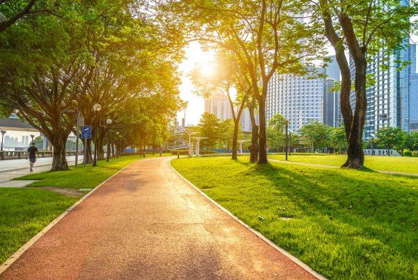 ciudades más verdes entornos sostenibles áreas verdes sanidad vegetal aepla