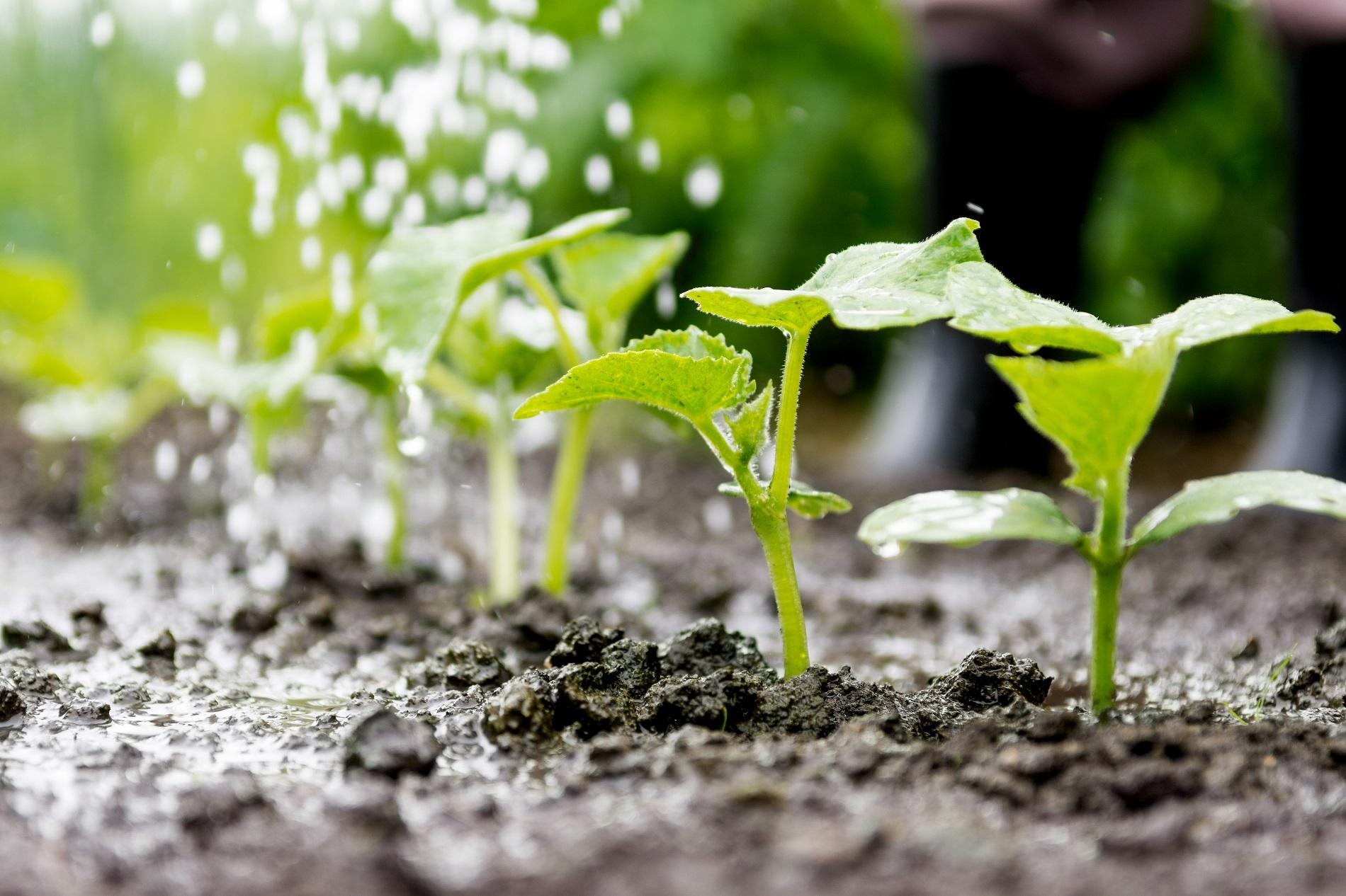 5 factores clave para proteger las masas de agua presentes en tu parcela agrícola