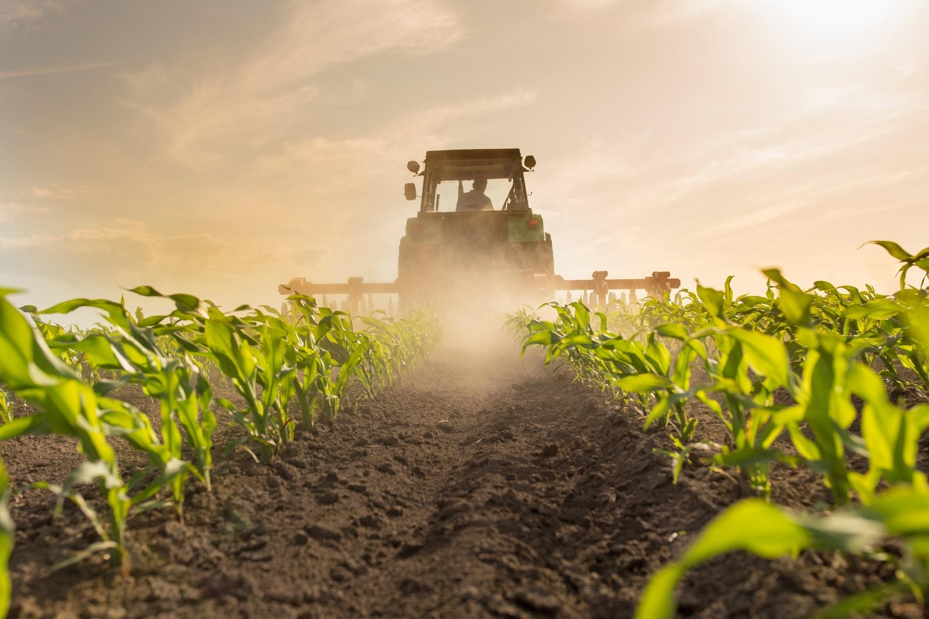 ¿Qué efectos provocaría renunciar a la necesaria protección de los cultivos?