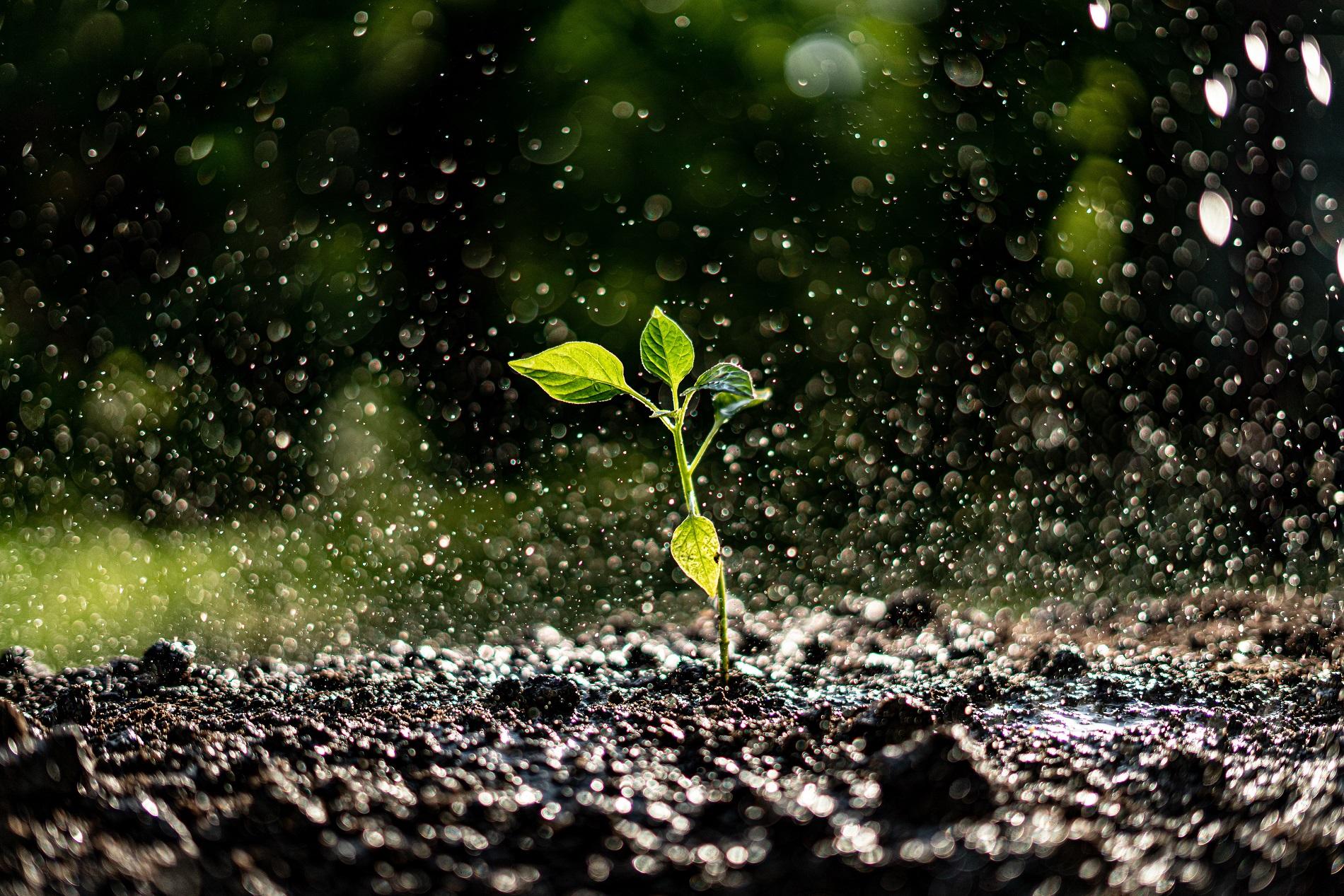 ¿Qué tipos de escorrentía pueden provocar una mayor erosión del suelo agrícola?