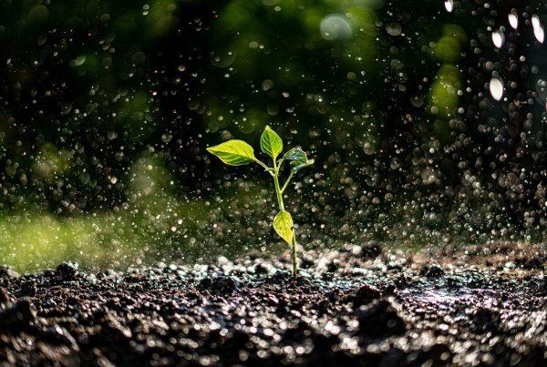 escorrentía erosión suelo agrícola agricultura sanidad vegetal aepla